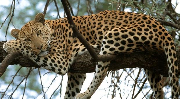 Kruger Half Day Open Vehicle Safaris - La Kruger Lodge