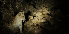Kruger National Park Night Drive