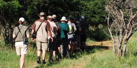 Kruger National Park Morning Walk