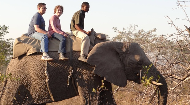 Elephant Interaction Safari